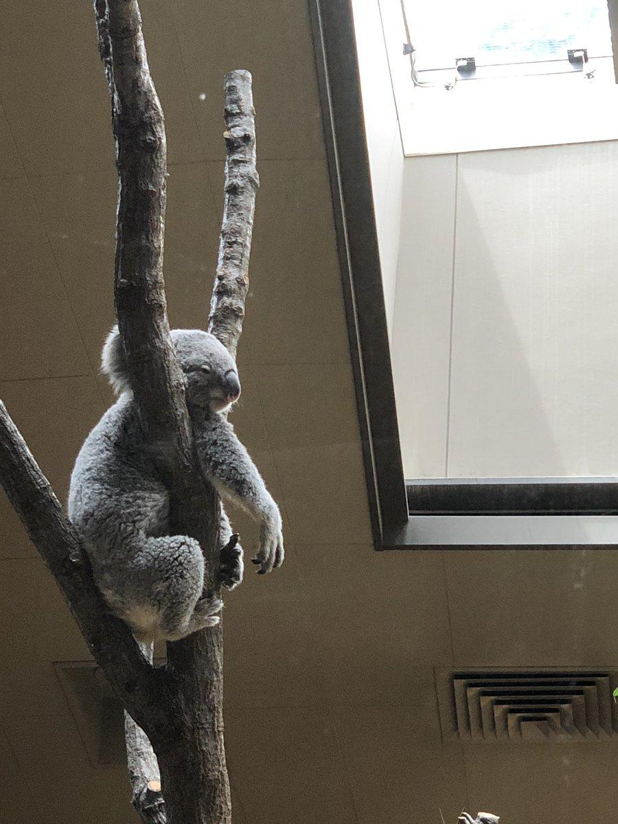 test ツイッターメディア - 名古屋旅行2日目は東山動植物園へ行って来た。イケメンゴリラで有名な動物園なんだけどゴリラが沢山いたからどれがシャバーニなのか全然分からなかったwあと、動物園が広すぎてノンビリ見てたら4時間ぐらい滞在してしまった。 https://t.co/TUf7zU0Gjp
