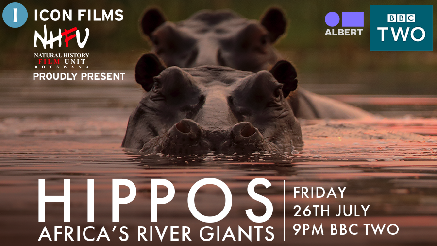 We're so excited to share the lives of the Okavango Delta's hippos with you in just one week's time on @BBCTwo. Tune into Hippos: Africa's #RiverGiants at 9pm on Friday 26th July to learn more about the animals who shape the water's course - and all life on the Delta https://t.co/wjVsloARJU