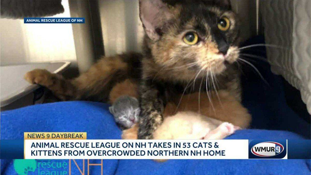 test Twitter Media - 53 cats and kittens rescued from New Hampshire home https://t.co/5S8yaB367i https://t.co/NBKRn3xLXh