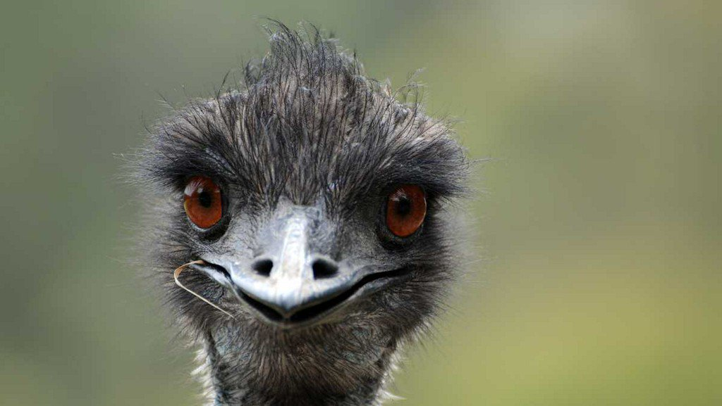 test Twitter Media - Emu-at-large evading authorities in North Carolina for 3 weeks https://t.co/6JDprG8gmK https://t.co/hDG4nGtm9T