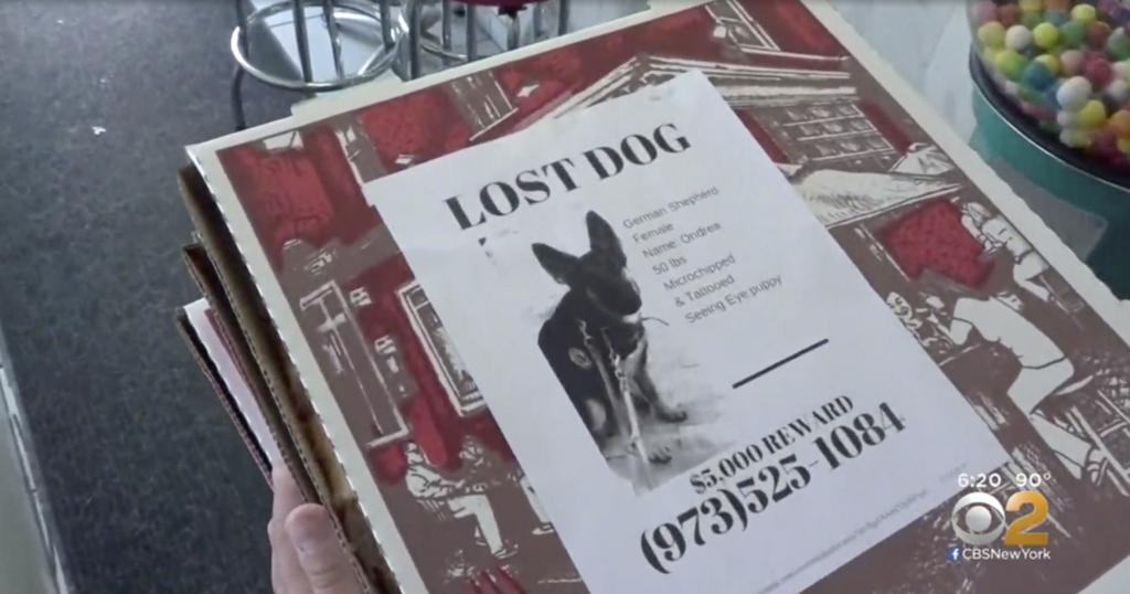 Pizzeria puts missing pet flyers on hundreds of pizza boxes
