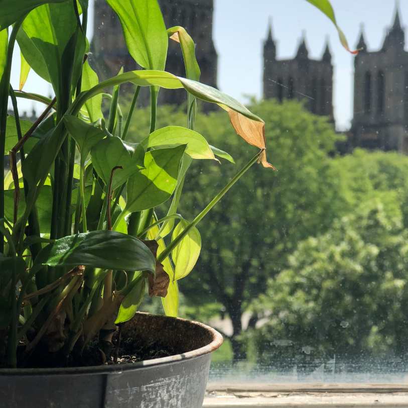 Excellent news that Bristol will be part of the @NationalTrust and @TNLUK's Future Parks programme 🌳 We're so excited to see how the @bristolparks Parks Foundation will be looking after our city's green spaces (like the one outside of our window!) https://t.co/0utPNSObqM