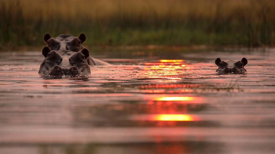 Another three star award ⭐️⭐️⭐️ The upcoming Hippos: Africa's River Giants for @BBCTwo has been recognised by @WeAreALBERT for its sustainable production practices - catch it July 26th from 9pm! https://t.co/qbwQ9ptKpE