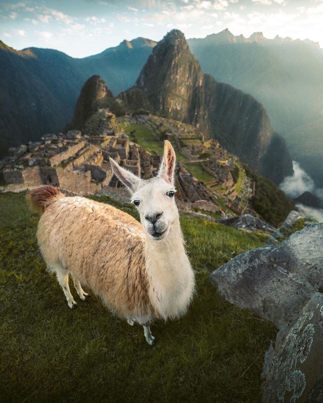 Llama 🦙 In Machu Picchu, Peru 🇵🇪 by @emmett_sparling . https://t.co/6LQFjNtY96