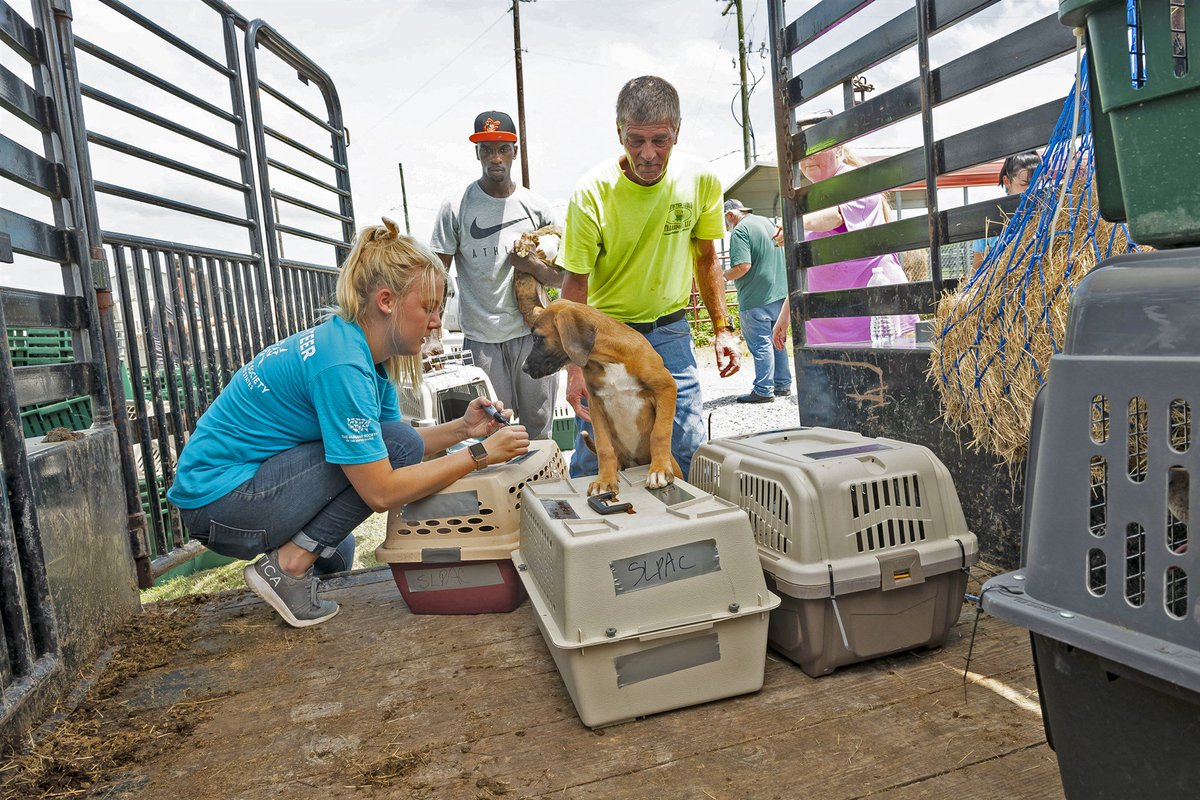 More than 120 dogs, cats in path of Hurricane Barry in Louisiana are flown to safety.