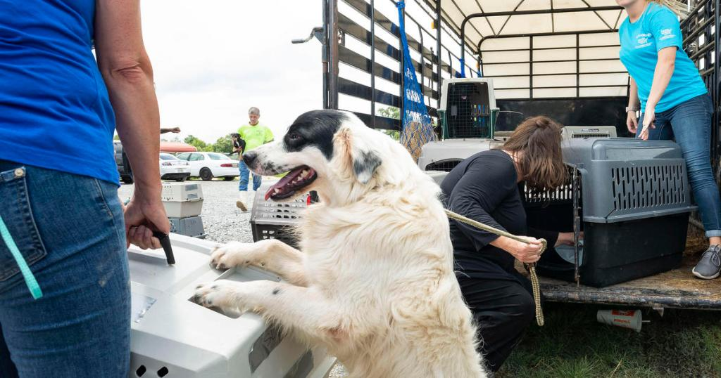 More than 120 dogs and cats rescued from Hurricane Barry's path in Louisiana