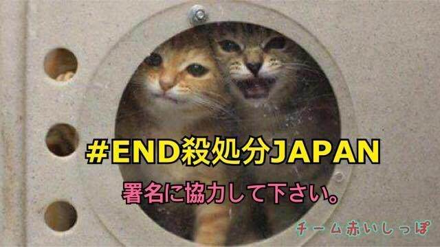 test ツイッターメディア - 【犬猫殺処分廃止100万人の世界大署名プロジェクト】 1,000,000 SIGNATURES TO END KILL SHELTERS JAPAN PROJECT! https://t.co/xz1V8PEk8s https://t.co/W21Sm82Tlv