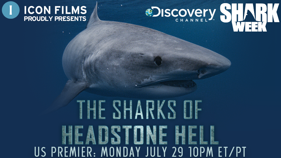 We're taking a bite out of @Discovery's #SharkWeek with #HeadstoneHell - tune in Monday 27 July to see the rare feeding practices that have turned the sharks of Norfolk Island into an extraordinary predator... https://t.co/EamxxXaBJk