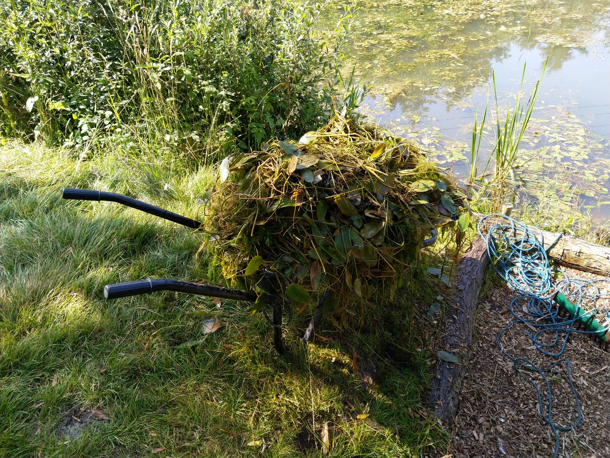 Spot of 'weed management' on the Back Lake... #RumBridgeFisheries #carpfishing #Suffolk https://t.co