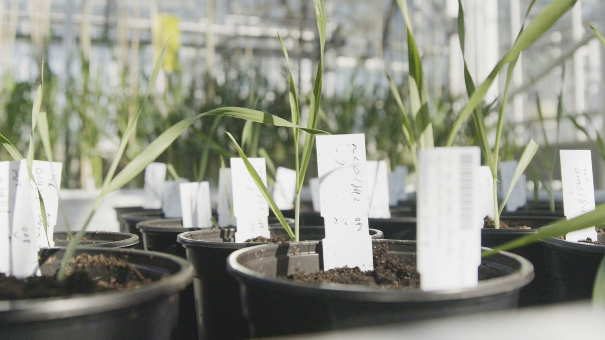 test Twitter Media - We're looking to recruit a Horticultural Technician to support @talbotlabTSL projects aimed at understanding the molecular basis of fungal pathogenesis in the rice blast fungus Magnaporthe oryzae.  Salary = £19,202 - £21,414  Closing date - Sun 11 August  https://t.co/JTMDxBb2ob https://t.co/Td11BhllYn