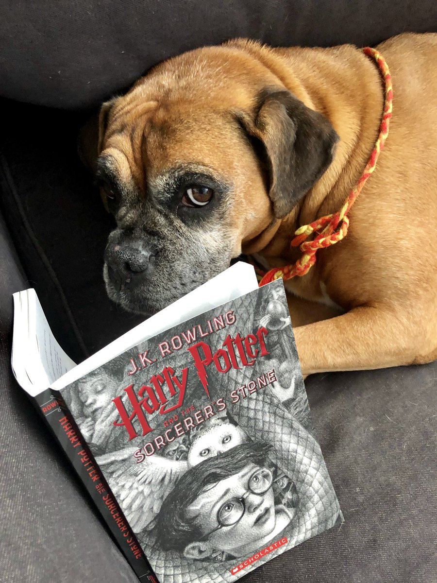 """test Twitter Media - July 18 🐾 Simba 📖 #JKRowling HARRY POTTER AND THE SORCERER'S STONE — """"They we're looking straight into the eyes of a monstrous dog, a dog which filled the whole space between ceiling and floor. It had three heads. Three pairs of rolling, mad eyes..."""" #boxerdogs #harrypotter https://t.co/WAWWr9G9QY"""