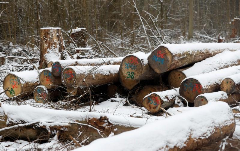 Top EU court says Poland broke law with forest logging https://t.co/Onl2C52OYr https://t.co/jtuxxQe2MT