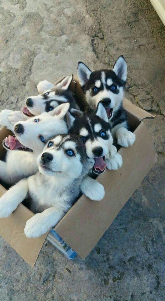 Nymeria and her siblings know whose birthday it is today. Happy Birthday, m\lady!