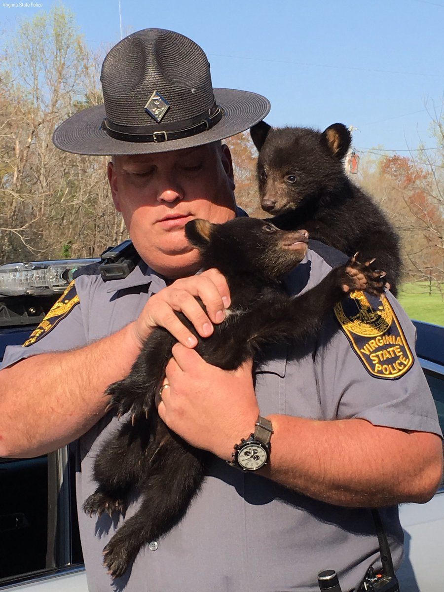 Black bear cubs rescued by @VSPPIO trooper after mother killed in crash https://t.co/HZwX5pXwpM https://t.co/8DBtB4yBQn