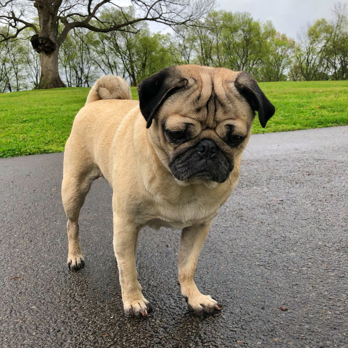 itsdougthepug the leftovers