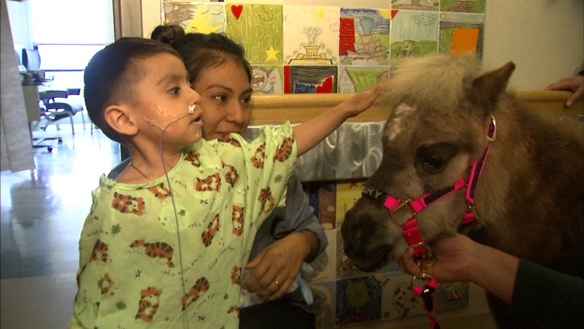 Therapy horses bring joy to pediatric patients at Loyola University Medical Center