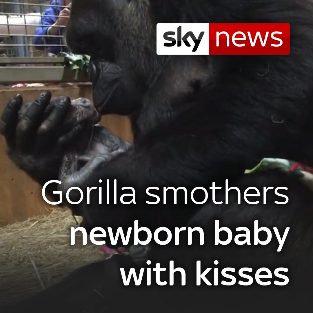 This gorilla at the Smithsonian National Zoo smothers its baby in kisses seconds after its birth https://t.co/YejhOJSsLW