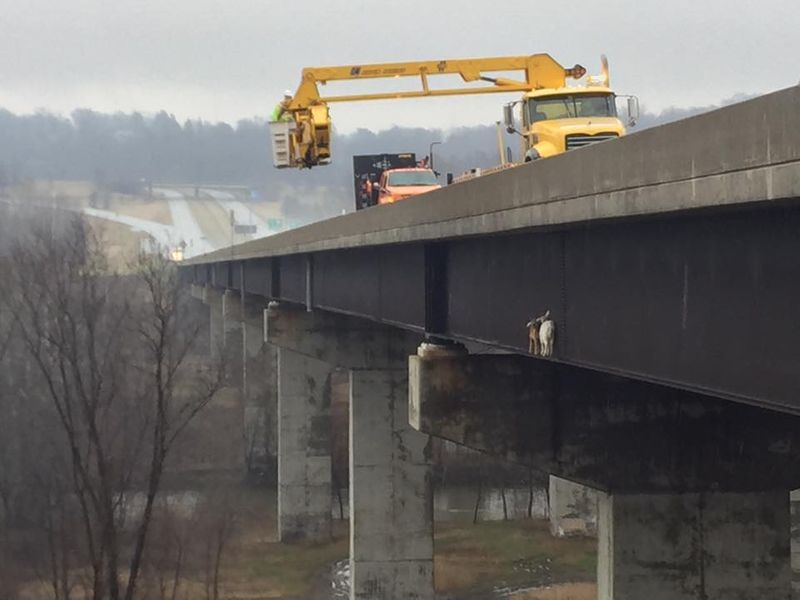 Pair of goats rescued from side of Pennsylvania Turnpike bridge - | WBTV Charlotte