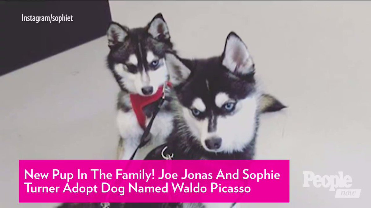 New Pup in the Family! Joe Jonas and Sophie Turner Adopt Dog Named Waldo Picasso
