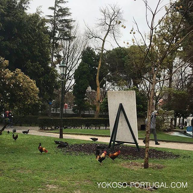 test ツイッターメディア - リスボンの公園には、鶏もいます。 #リスボン #ポルトガル https://t.co/UbUasrA7Ku