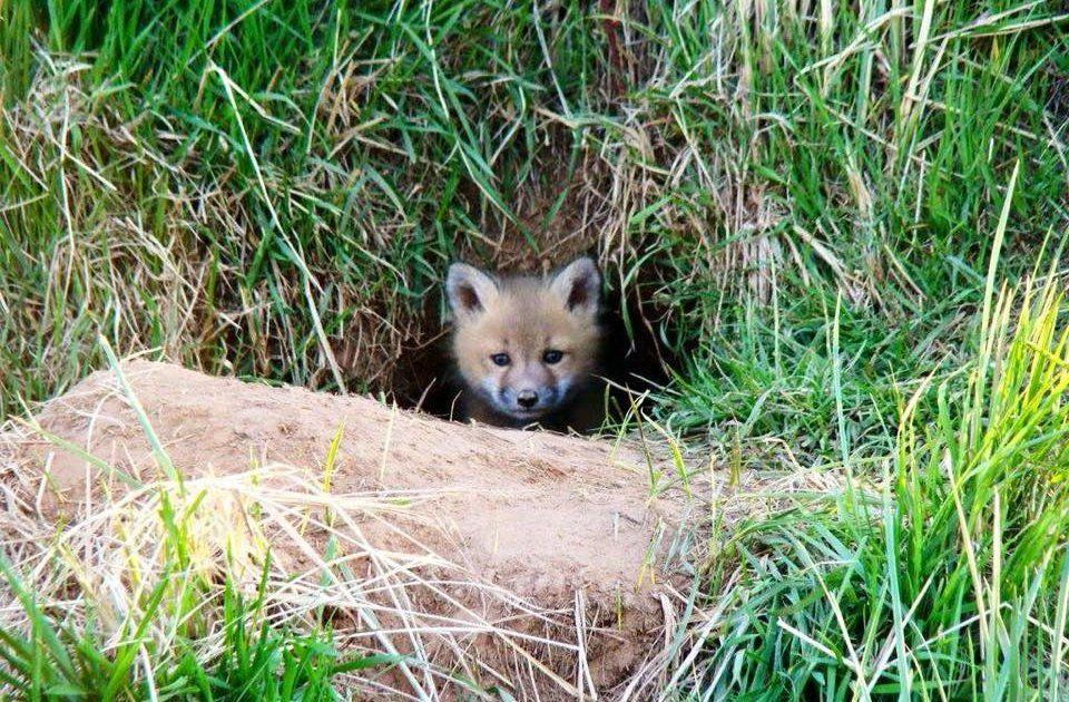 RT @dodo: #ICYMI New Jersey is secretly killing its iconic wild foxes. https://t.co/isRbBPxXFc https://t.co/x8XJ459X5H