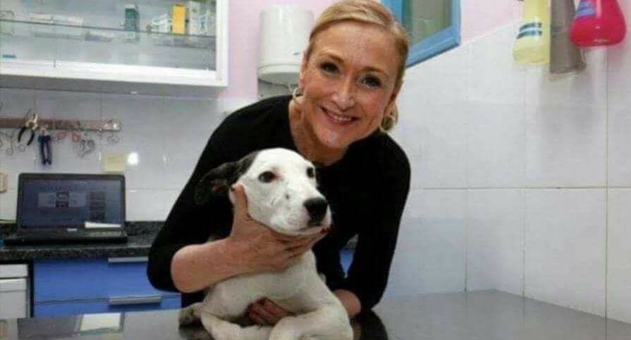 RT @_AlbertoSuarez: También tengo un Máster en Veterinaria! Os presento a mi gato... #JaqueCifuentesARV #whatsapp https://t.co/vUhgLQB9eH