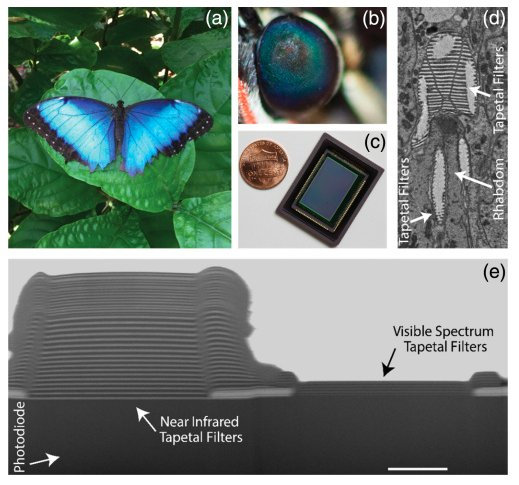 test Twitter Media - Featured data: Bio-inspired imager improves sensitivity in near-infrared fluorescence image-guided surgery - https://t.co/IikZJCUsuP @OpticalSociety https://t.co/u9nYxNNs9O