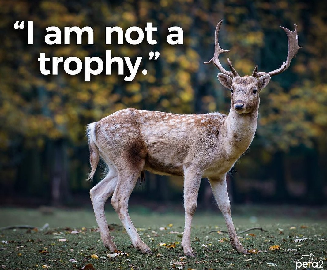 RT @peta2: RT if you know hunting is NOT a sport ❤️???? https://t.co/h3gTVzI6Oj