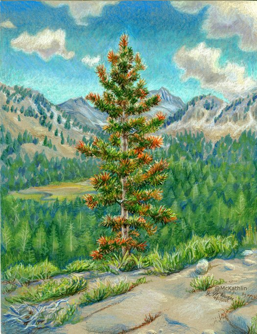 ""\""""Portrait of a Tree"""" for my favorite nature boy. Happy birthday!""525|680|?|en|2|c766f794c24195c188aee8a9d7fdde72|False|UNLIKELY|0.29863014817237854