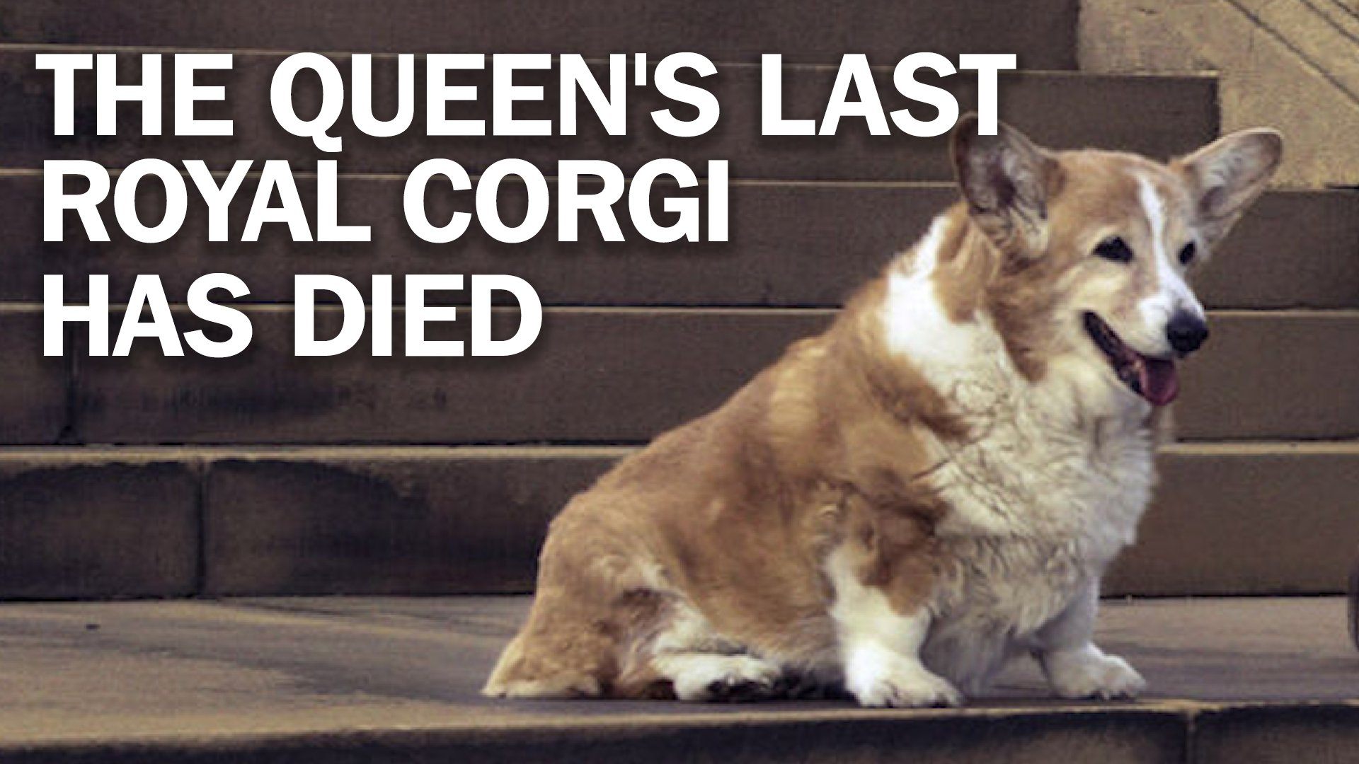 Queen Elizabeth lost the last of her beloved corgi dogs this weekend https://t.co/NhQ1ecGiZG https://t.co/jrsMDVInTJ
