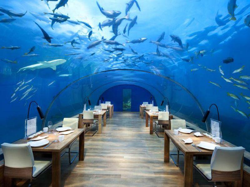RT @tictoc: The Maldives now has a $50,000 underwater hotel room https://t.co/XzzcgZnjLp https://t.co/qGZRGTEGPn