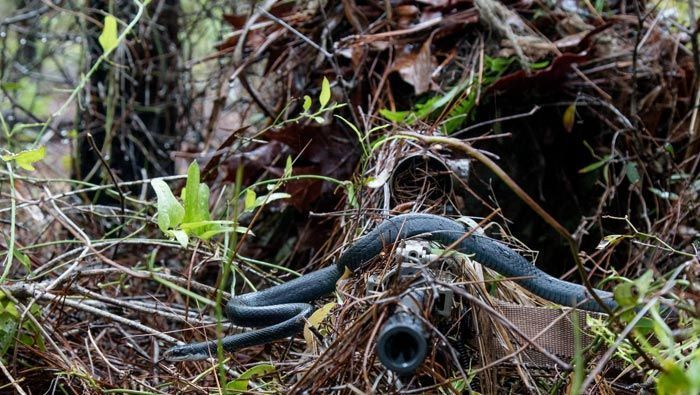 Snake slithers across sniper's rifle in National Guard photo - | WBTV Charlotte
