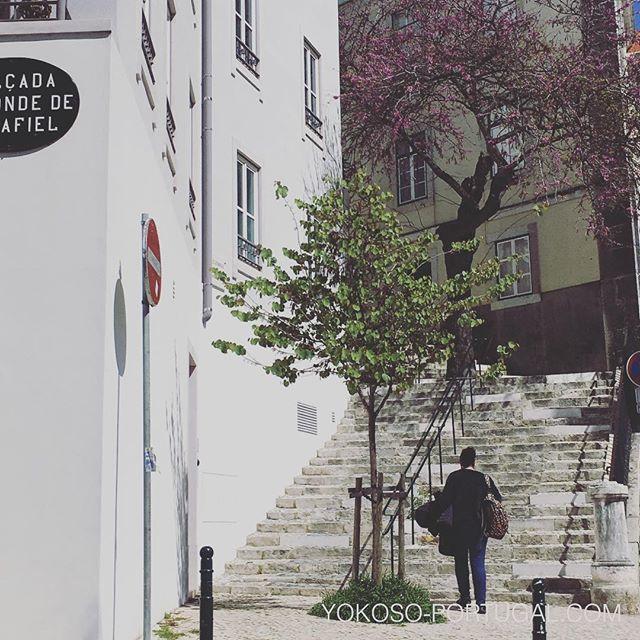 test ツイッターメディア - 例年より寒かった冬もようやく終わりそうです。本日は24度まで上がり、街のあちこちに花が咲き始めています。 #リスボン #ポルトガル https://t.co/SaNGDHfv0k