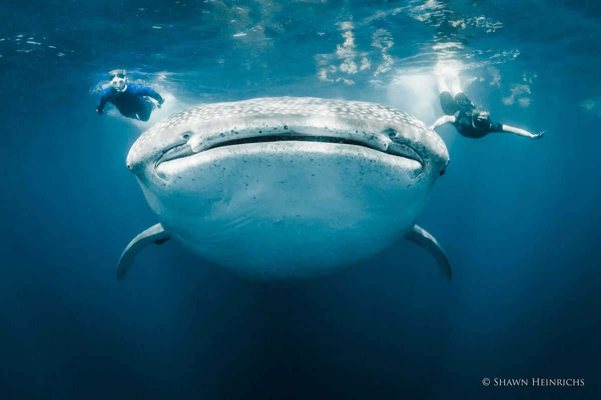 RT @WhaleSharkRocky: #FridayFeeling coming in HOT!!! 😆🐋🦈 https://t.co/aalTcDHUDK