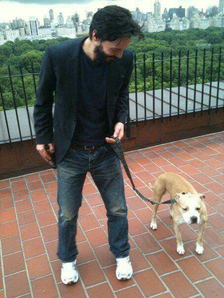 RT @keanuthings: keanu reeves with dogs https://t.co/Ay6AuIbkxx