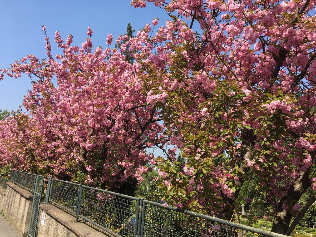 test Twitter Media - Frühling in Wuppertal. Einfach wunderbar! https://t.co/17R6N5VmY6