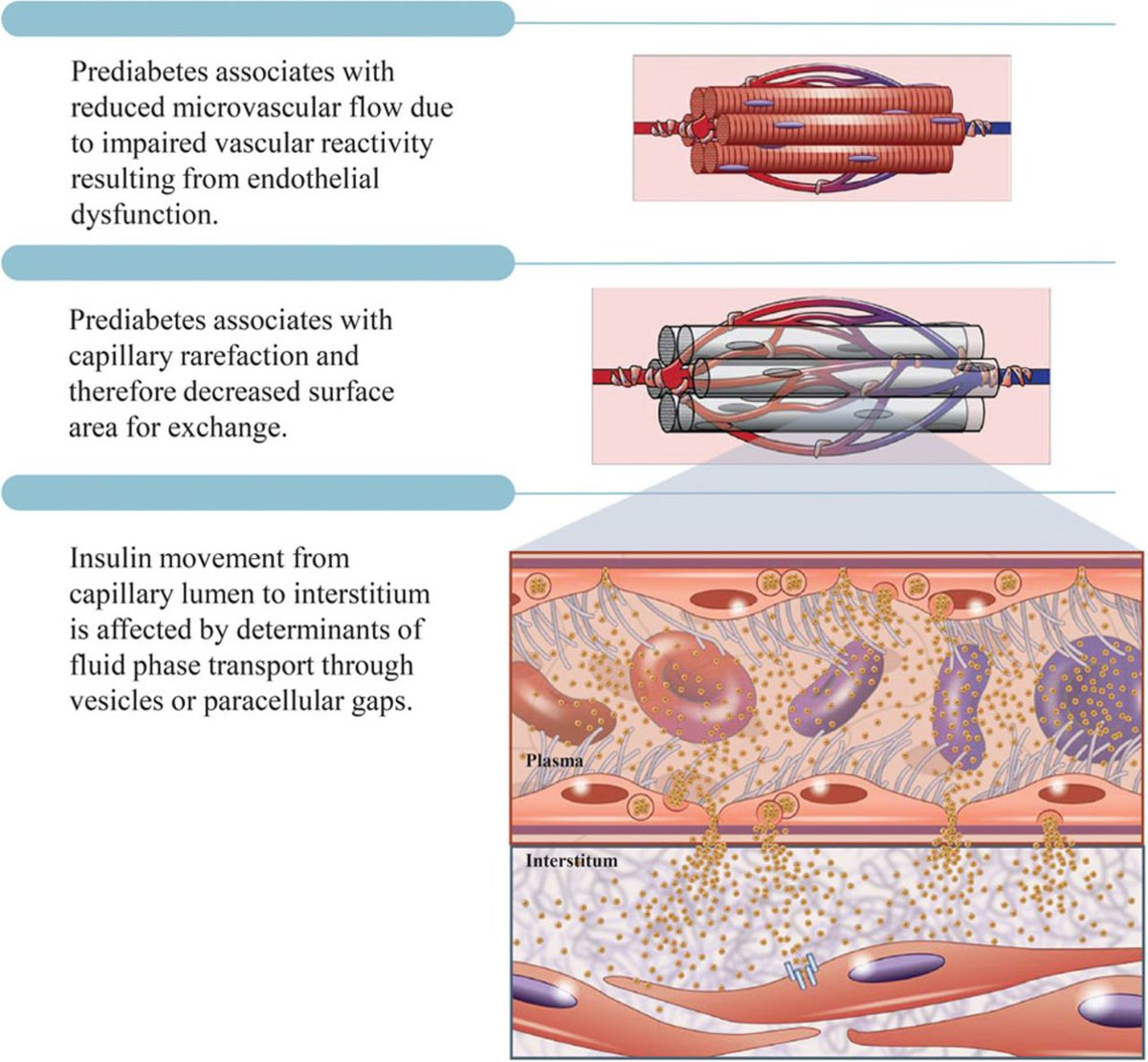 test Twitter Media - REVIEW:  The Vasculature in Prediabetes   https://t.co/sOzpuGjh7Q   #Prediabetes #ScienceTwitter #CardiovascularResearch #HeartResearch #Diabetes #cardiovasculardisease #CardiovascularHealth  #insulinresistance #Insulin #obesity #HealthRisks #RiskFactors #hyperglycemia https://t.co/giT2r8sE9u