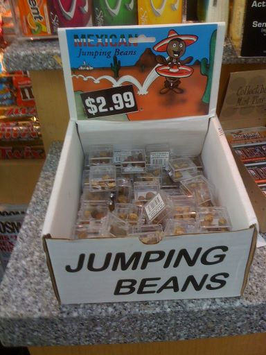 What are Mexican jumping beans and how do they jump? https://t.co/dlCGb6REio #DidYouKnow https://t.co/9IzEiEetSG