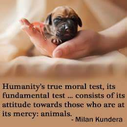 RT @PrancerPaw: #smallactsoflove Be kind to all animals ???? https://t.co/KV475TbajH