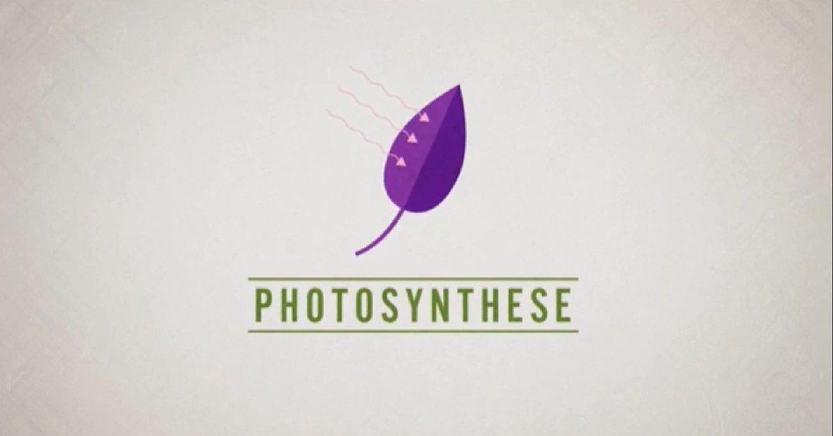 test Twitter Media - Bei unserem Partner @lehrer_online finden Lehrerinnen und Lehrer Unterrichtsstunden zum Thema #Fotosynthese. Schülerinnen und Schüler erarbeiten mit Videos und Arbeitsblättern die Fotosynthesegleichung. Das Material wird durch unsere Mediathek ergänzt https://t.co/j9VaBCC6Ys https://t.co/uM3v4T1uFL