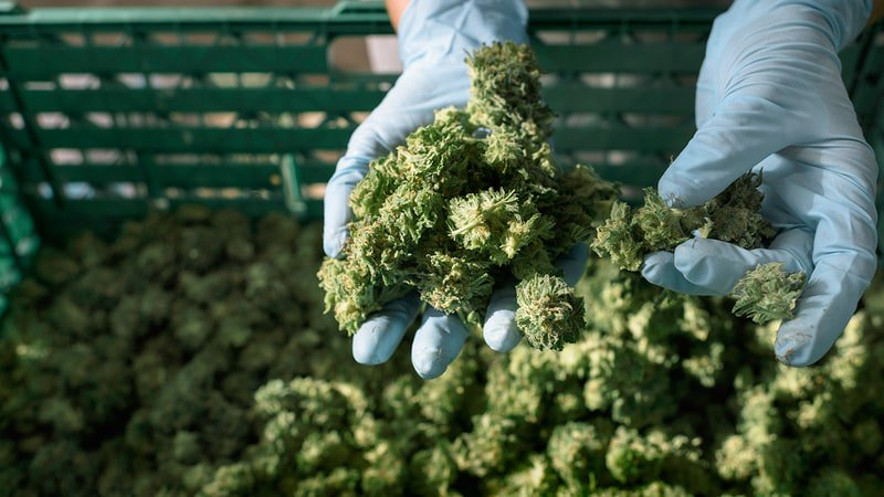 Inside the new pro-pot web doc 'The Truth About Cannabis' https://t.co/2IKNJzb7TV https://t.co/NQux9USxOr