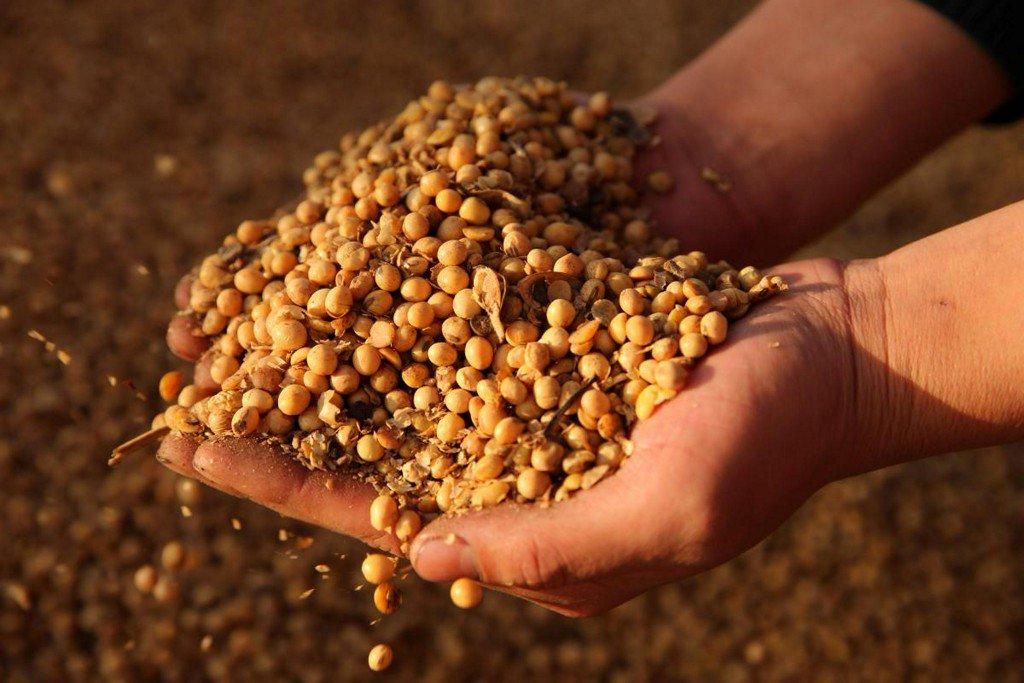 After sorghum spat, U.S.-China trade fears halt soybean imports https://t.co/TxExCcNTCJ https://t.co/IfvKUkAVoY