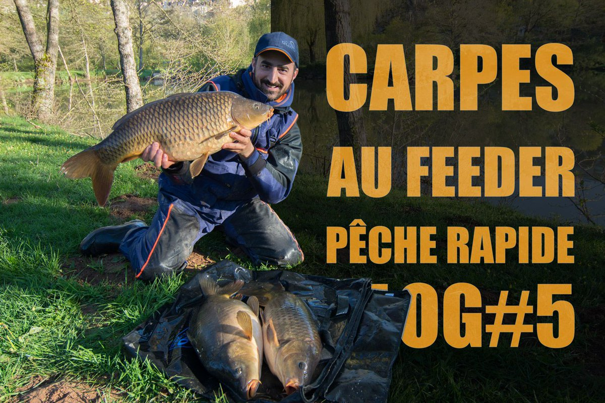 Carpe au feeder en mode pêche rapide - vidéo VLOG#5 #carpfishing #fishing  https://t.co/d6Vx6wiGAb