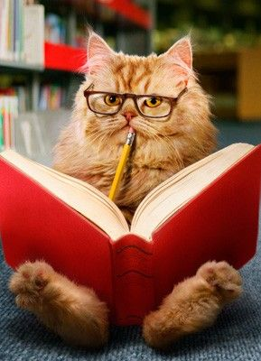 You know you're a writer when staring into space counts as working...    #amwriting #writerslife https://t.co/6Aeg9EAIIm