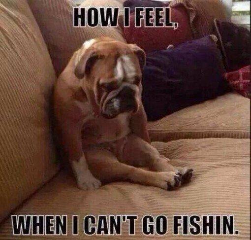 Oh Yeah  Welcome to https://t.co/dIzpj1Biyr  #carpfishing #<b>Lure</b> #sportfishing https://t.co/aY