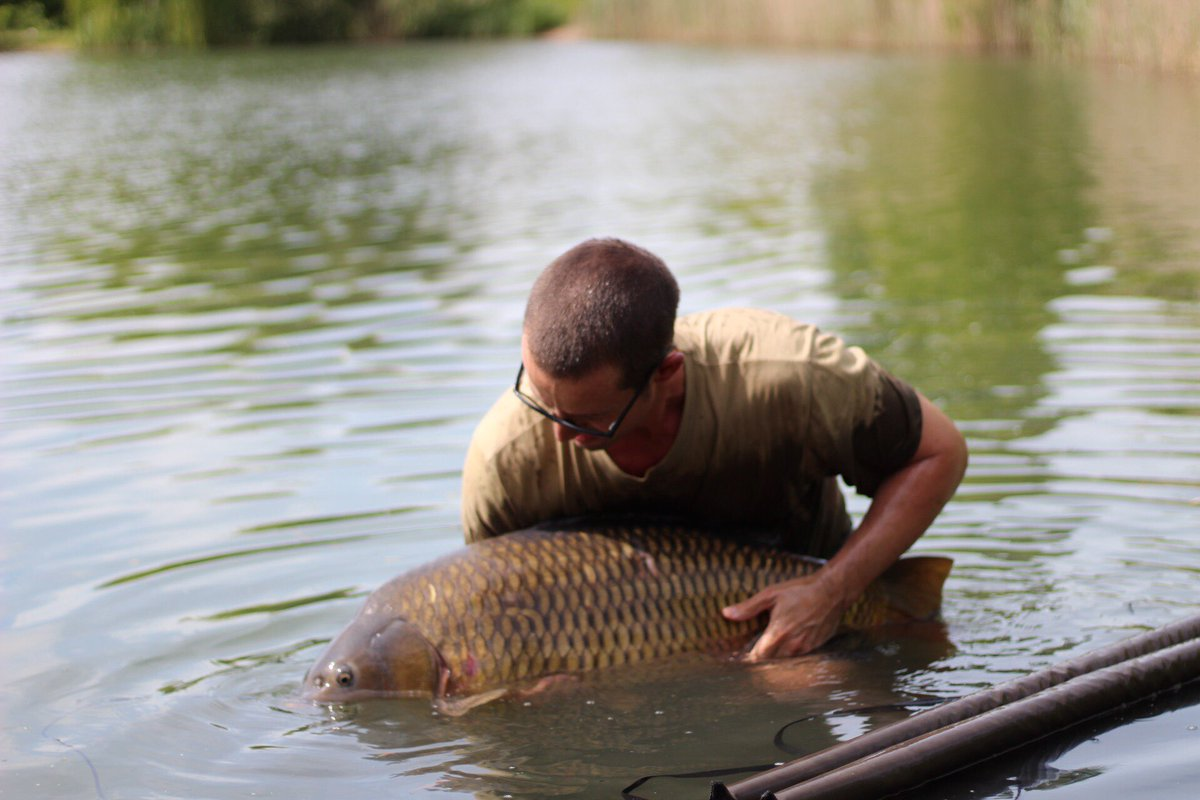 Stunning lovely carpiness. Back you go 😍🐟 #carpfishing #carp https://t.co/aa6tmjhJ1M
