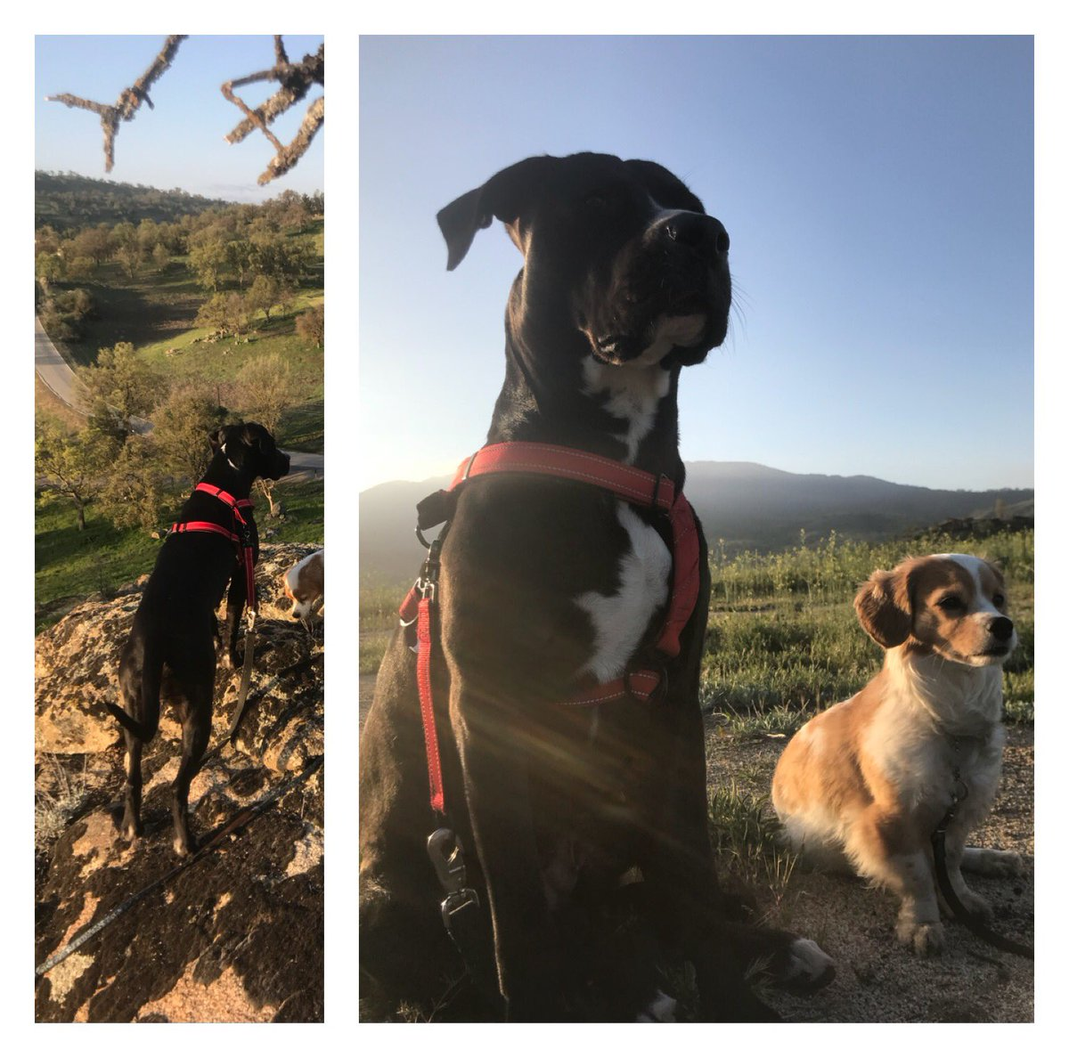 Morning hike with my furry babies. lBQxoHwmql