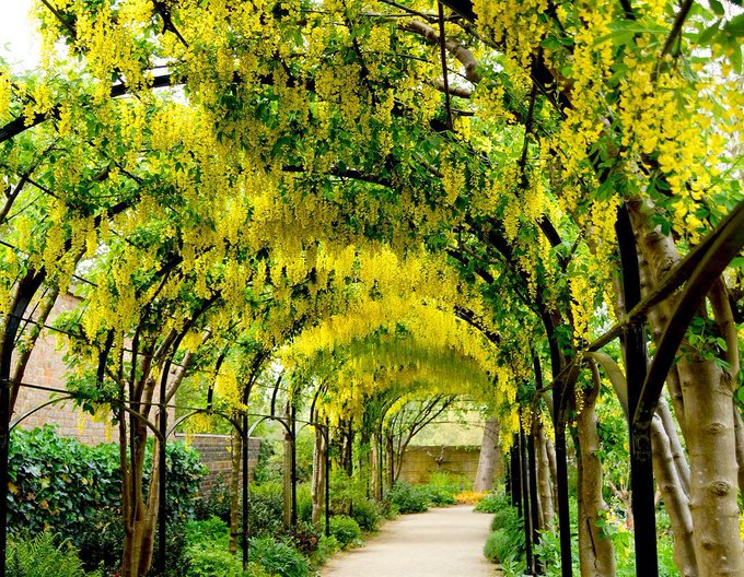 Saw this picture by @kewgardens and immediately decided that yellow is our favourite colour. You?