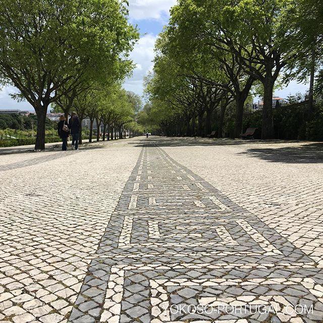 test ツイッターメディア - リスボンの並木道の石畳。 #リスボン #ポルトガル https://t.co/oKHEDqUfb4