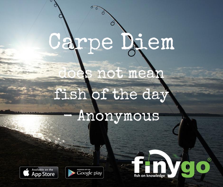 Carpe Diem? Doesn't it mean carp of the day?! 🤔🎣�<b>😂</b>  #carpfishing #carping #carpli
